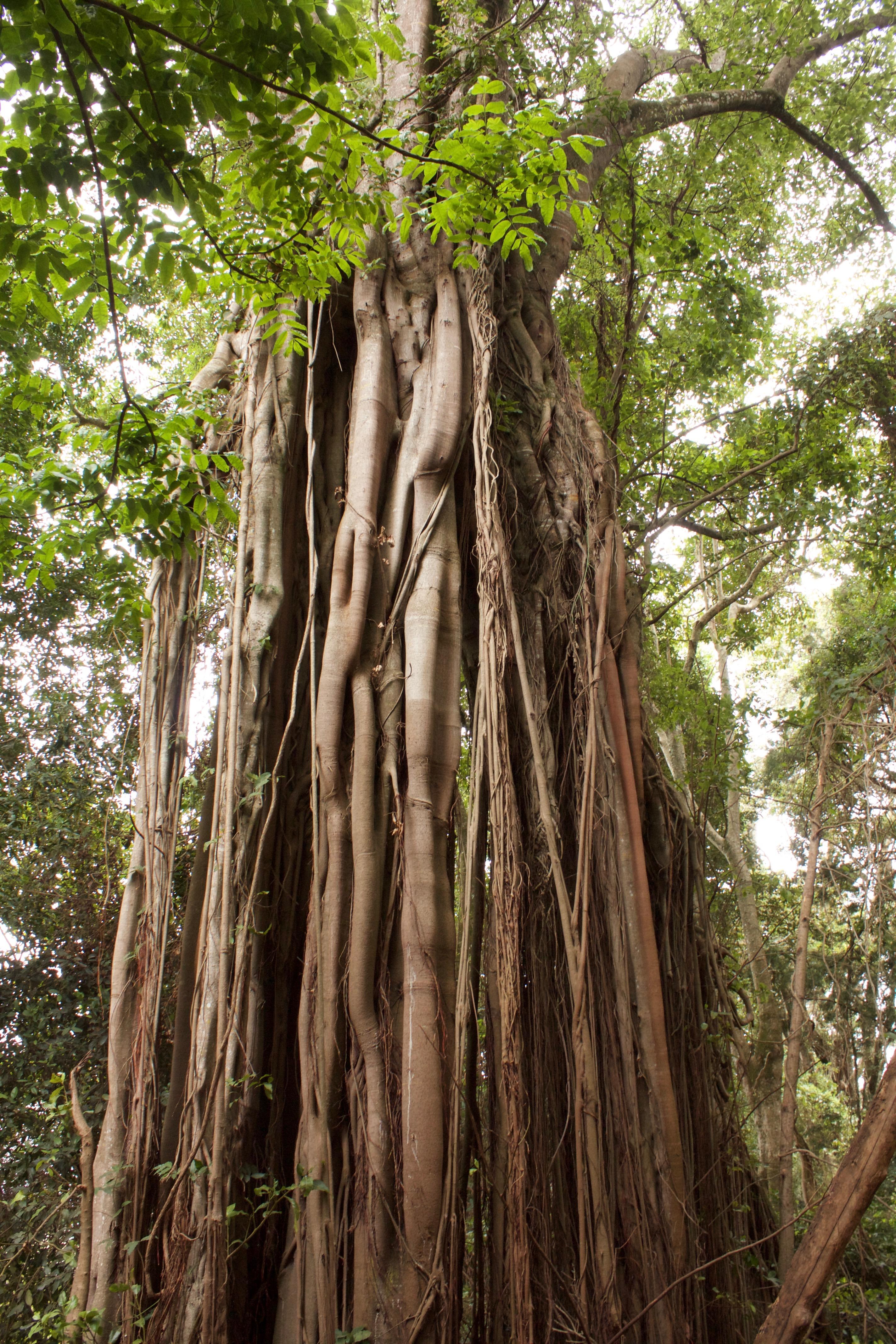association nature et savoirs